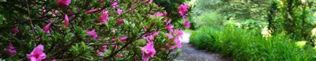 cropped-pink-flowers.jpg
