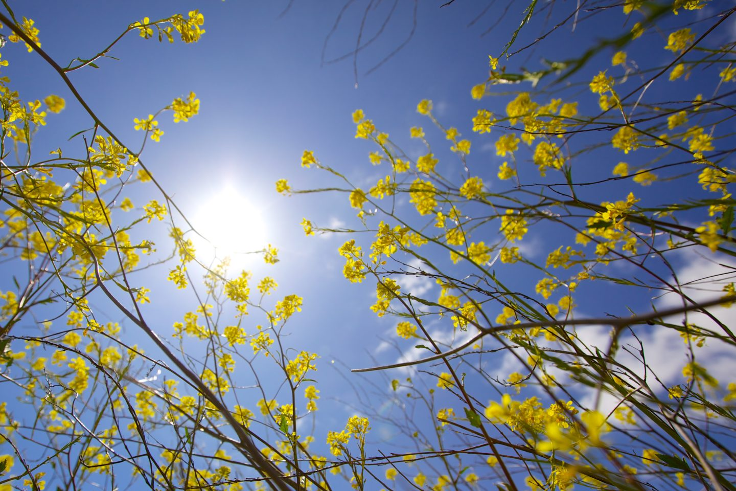5 top tips on how to help hay fever