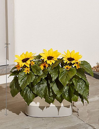 sunflower planter.jpg