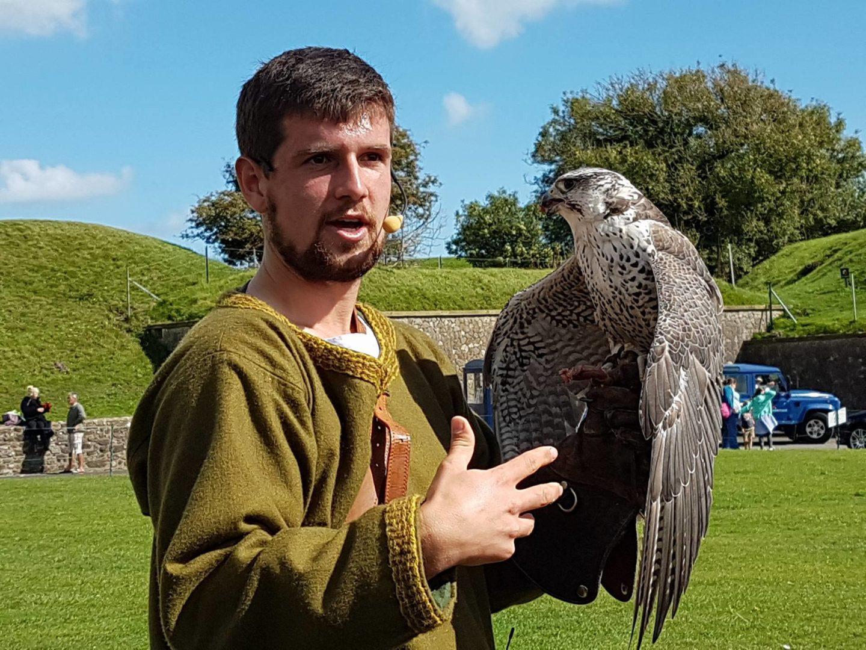 saker-falcon-raphael-falconry-dover-castle