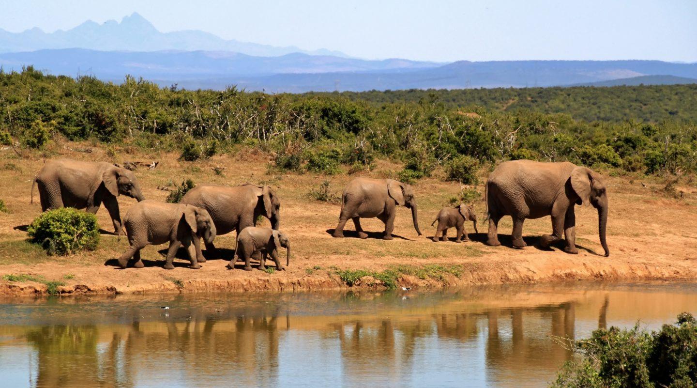 African wetlands