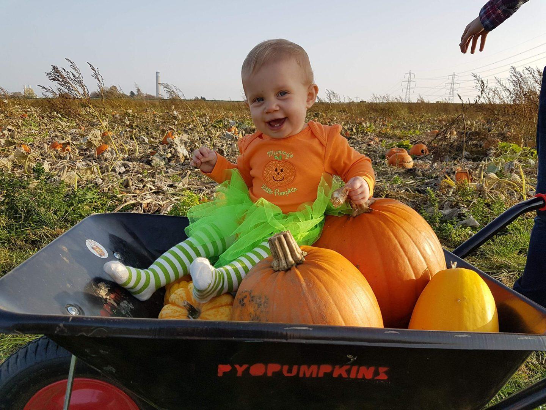 1 year old, PYO Pumpkins, Beluncle Farm, Hoo, Rochester