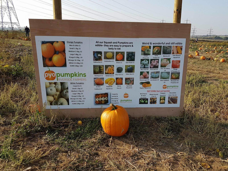 PYO Pumpkins Sign
