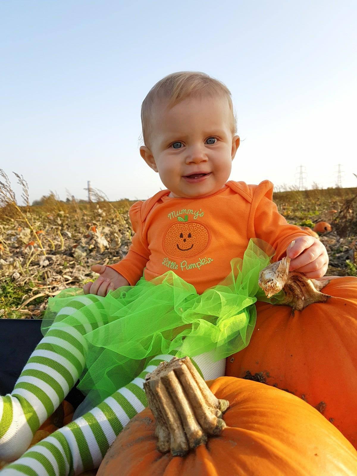 Beluncle Farm pumpkin picking in Kent