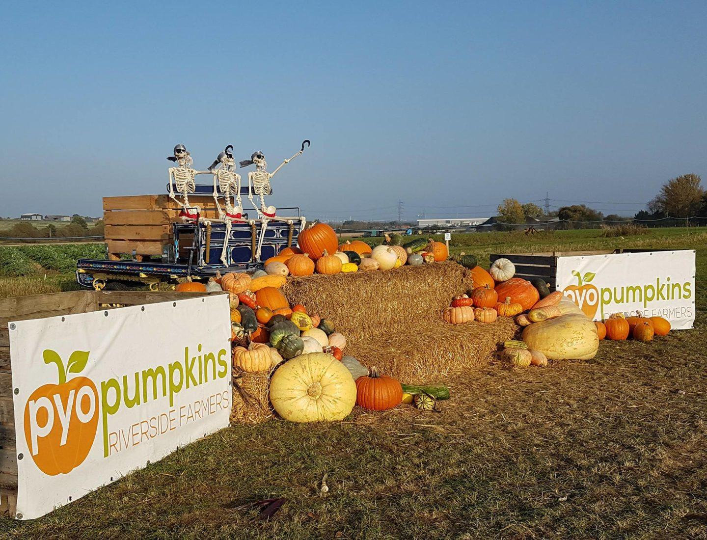 PYO Pumpkins display