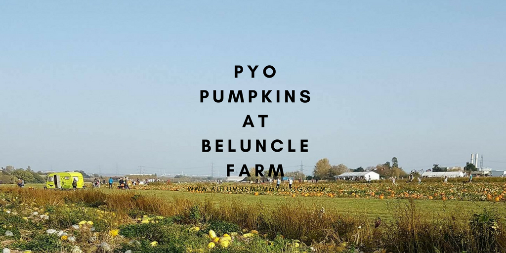 PYO Pumpkins at Beluncle Farm