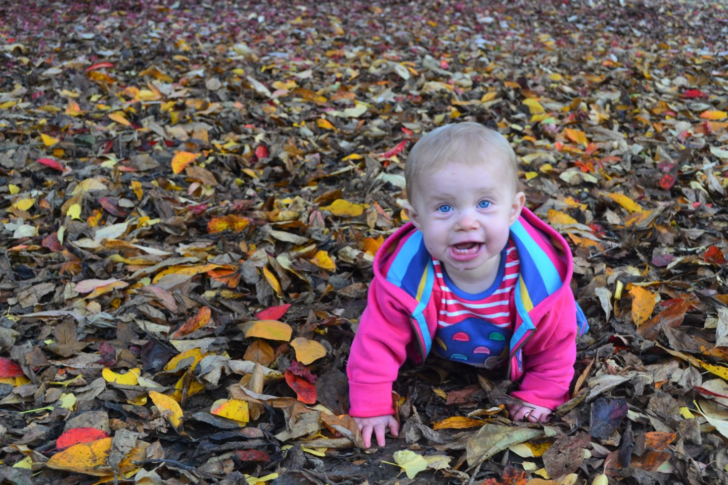 Autumn playing in leaves