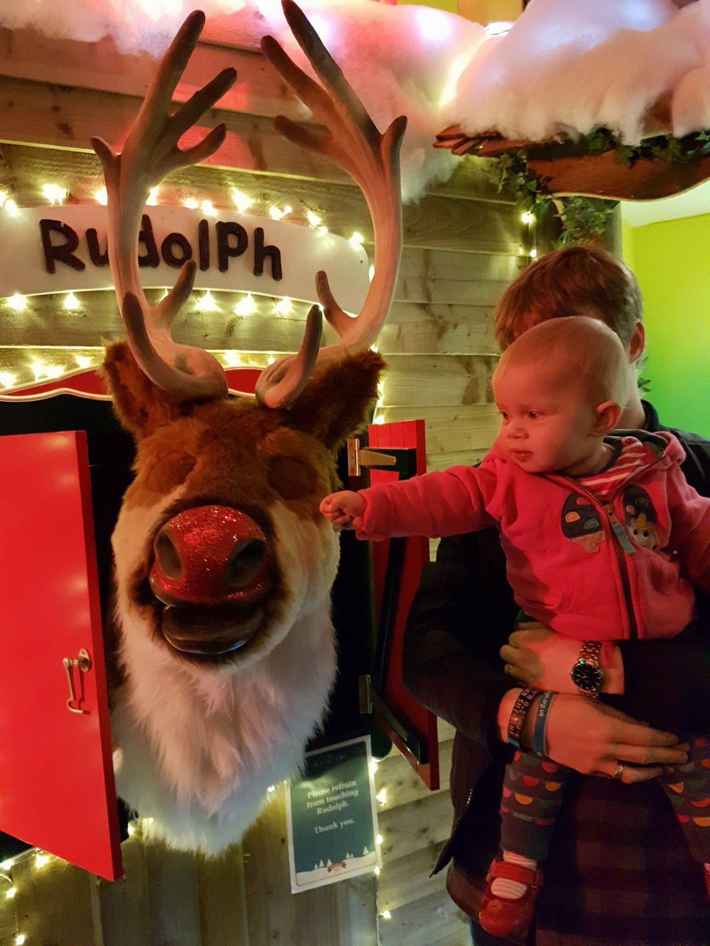 Rudolph, Bluestone Wales
