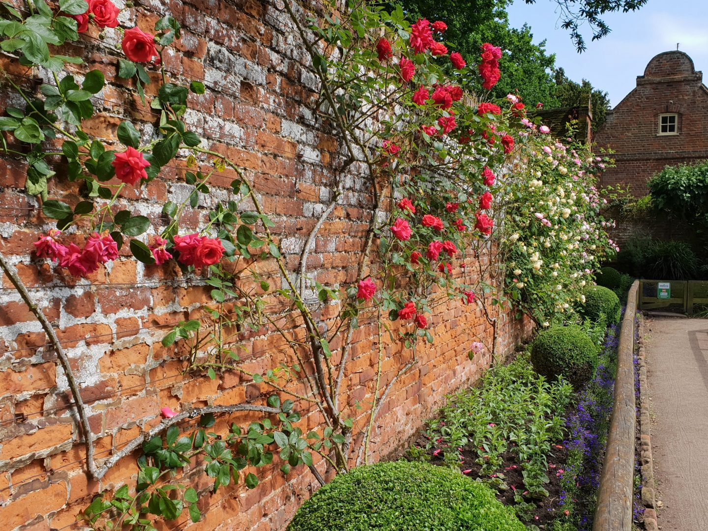 Walled rose garden at Howletts, Kent