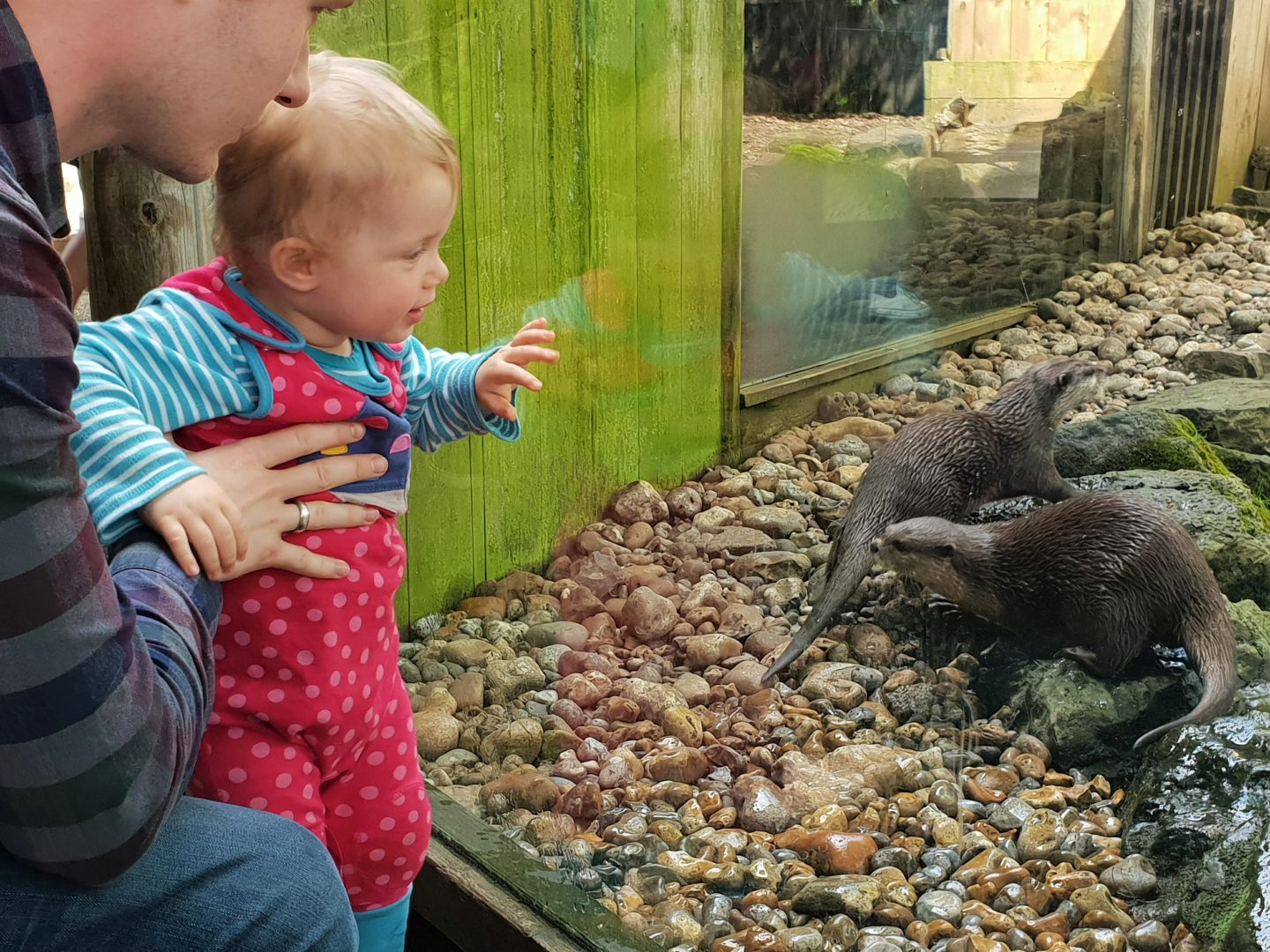Toddler and otters at Drusillas Park