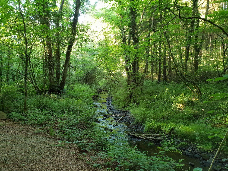 Wood nature trail at Bluestone