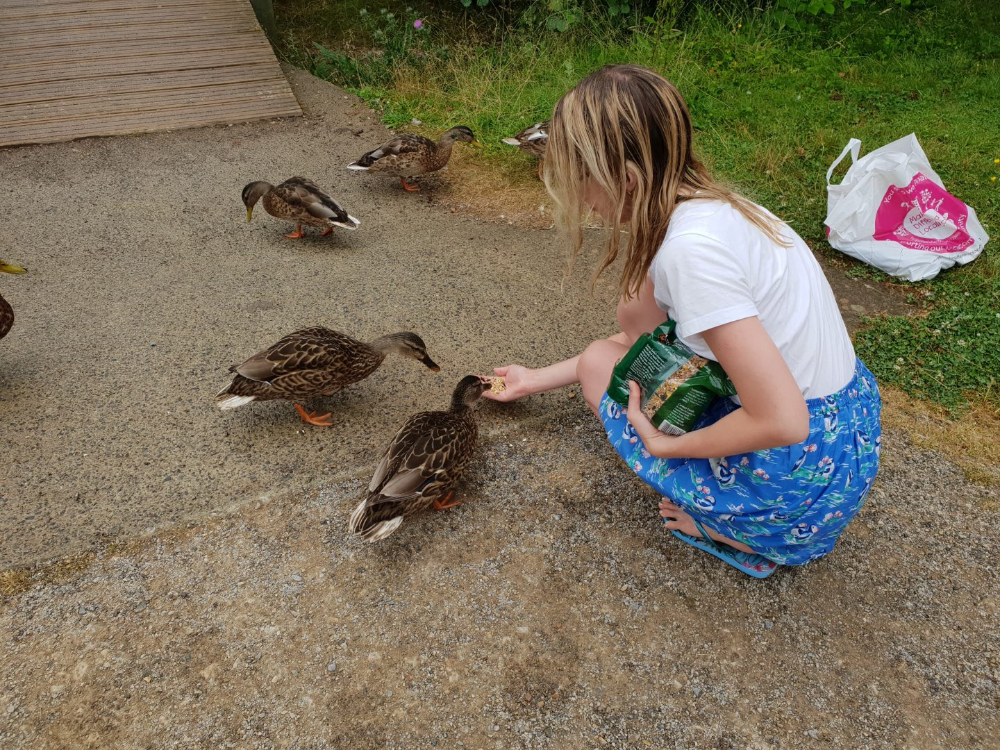 Feeding ducks at Bluestone, Wales