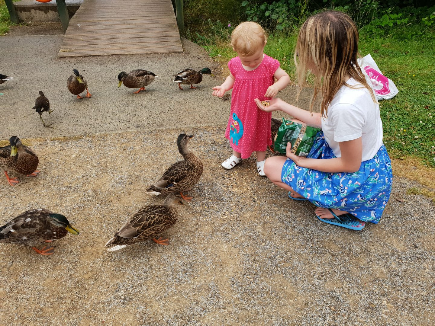 Feeding the ducks at Bluestone, Wales