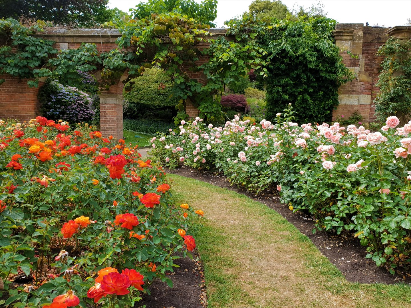 Rose garden in bloom, July, Hever Castle