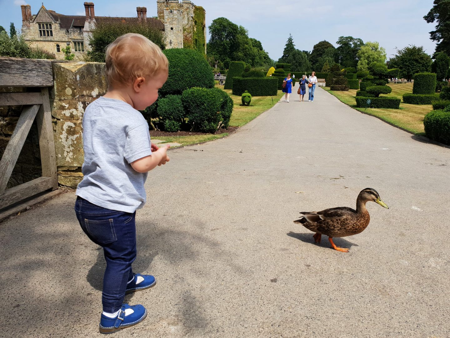Feeding ducks at Hever Castle