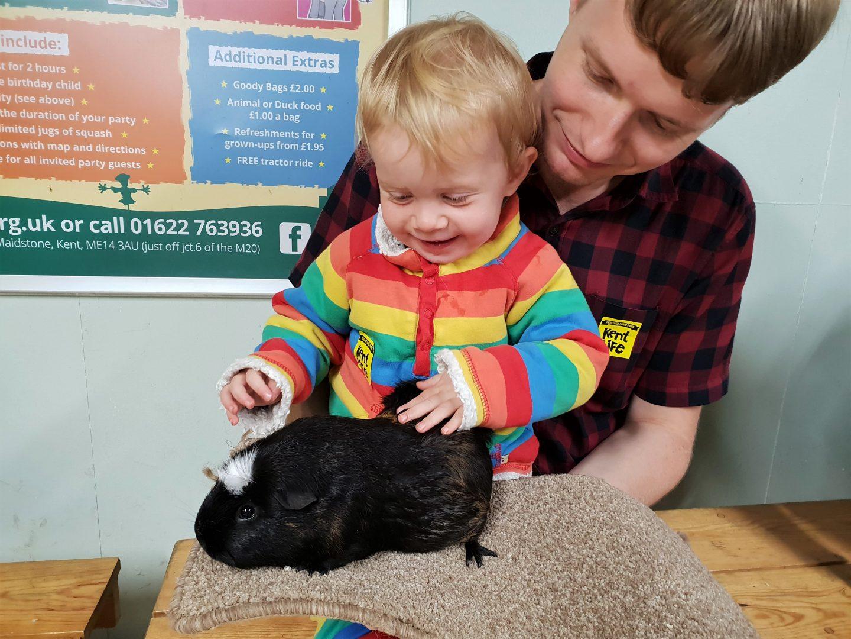 Toddler stroking guinea pig in cuddle corner at Kent Life, Maidstone