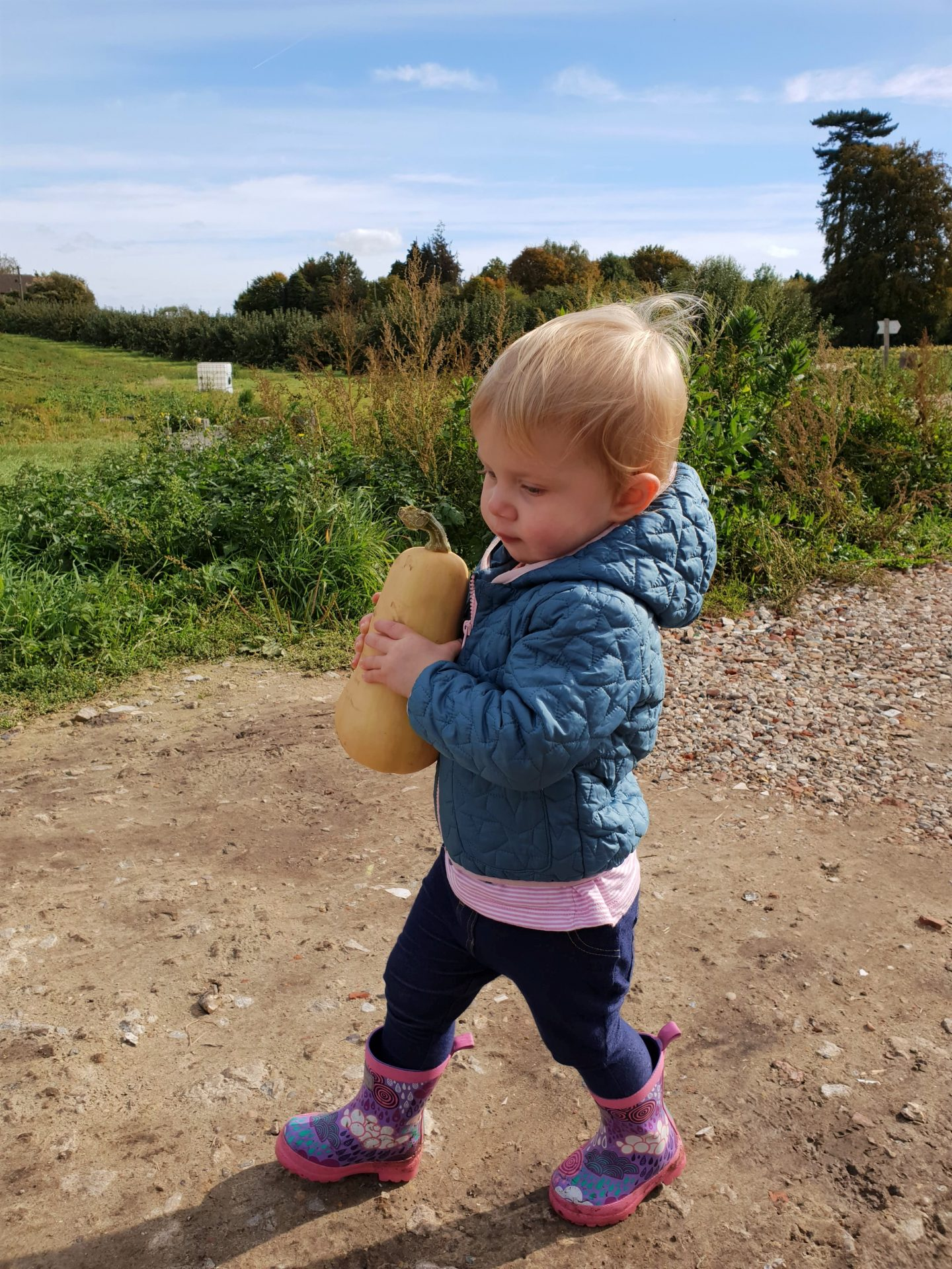 Toddler on farm in Meopham with butternut squash