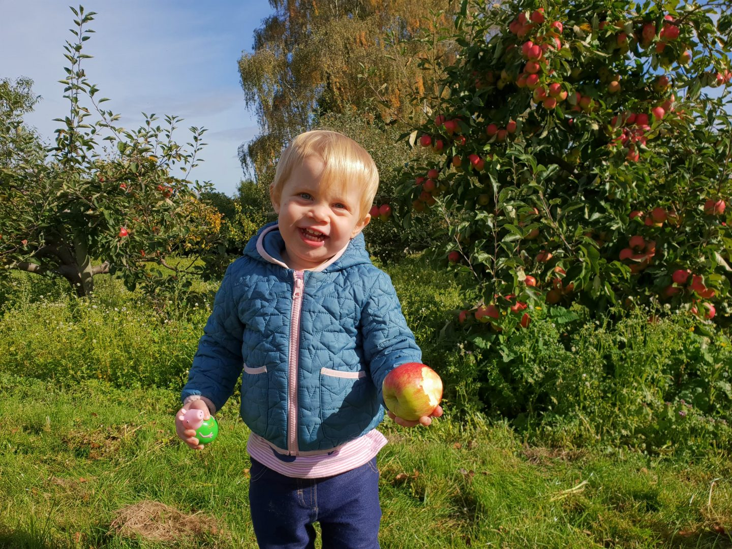 Toddler at Foxendown Fruit Farm in Meopham with apple