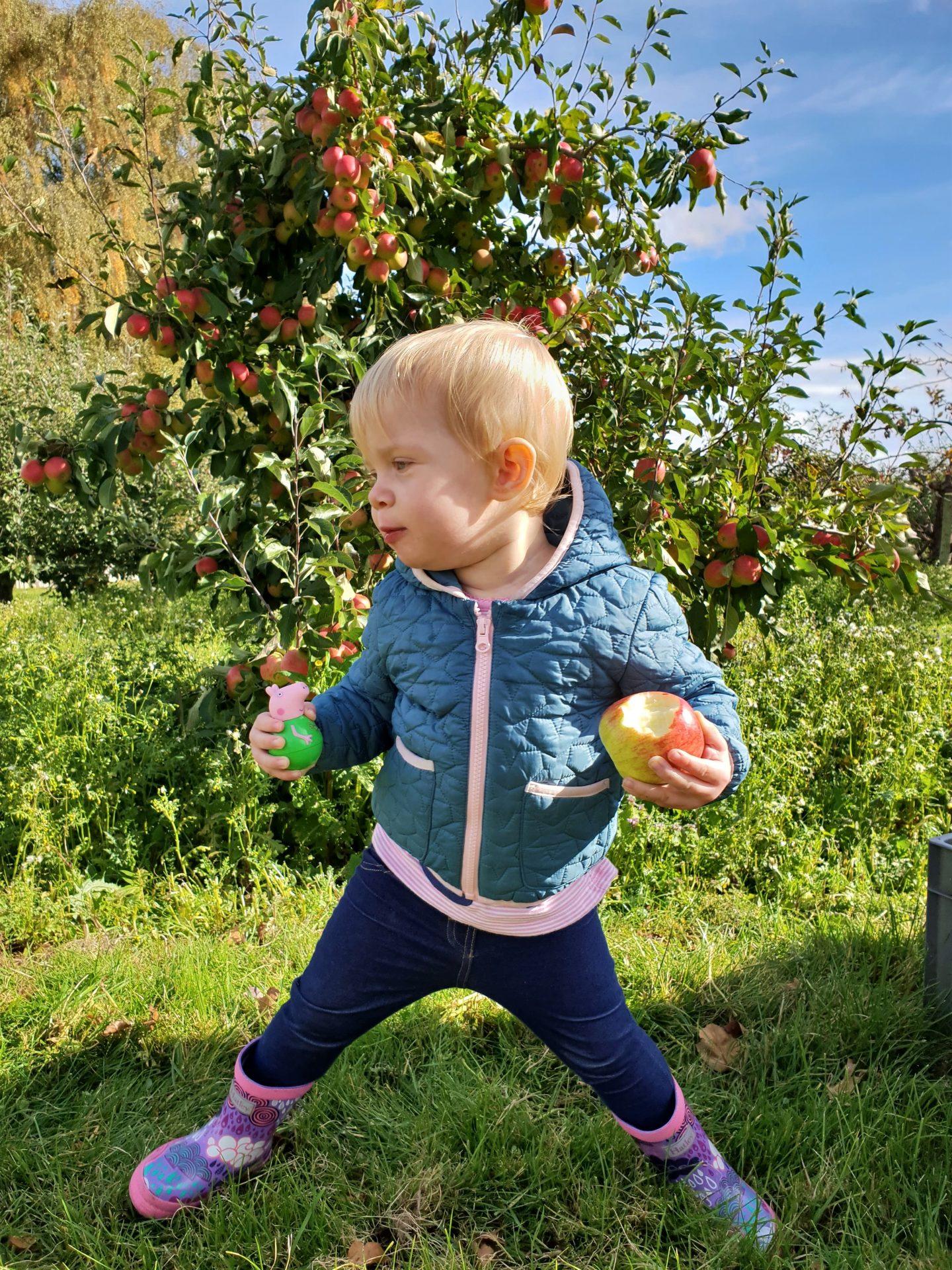 Toddler apple picking in Meopham, Kent