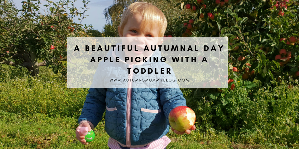 A beautiful autumnal day apple picking with a toddler