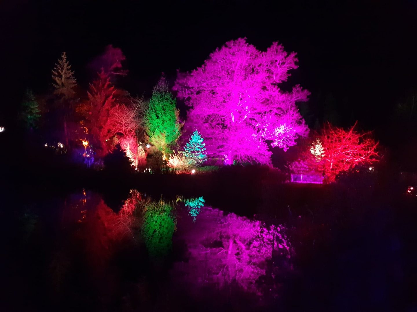 Lights at Bedgebury Pinetum