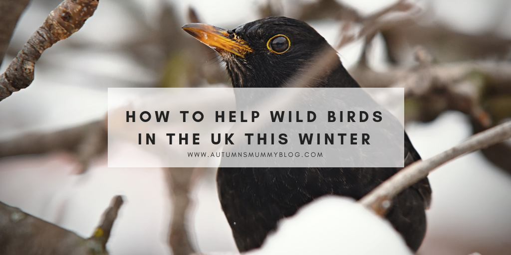 How to help wild birds in the UK this winter