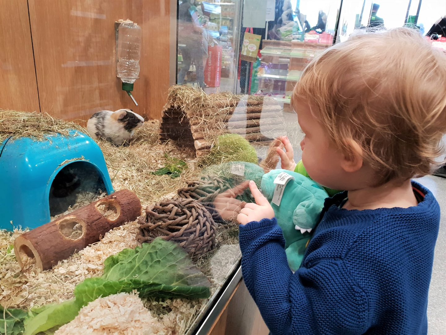 Toddler looking at guinea pigs in Pets at Home, South Aylesford Retail Park