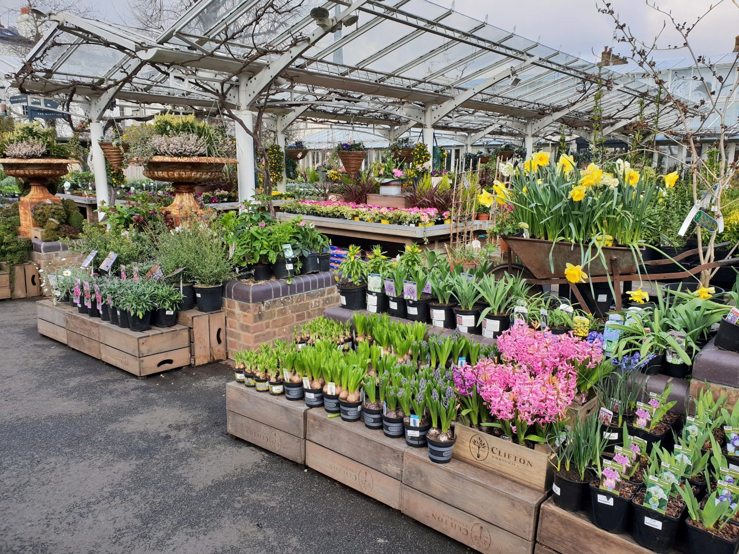 Spring flowers at Clifton Nurseries in Maida Vale, London