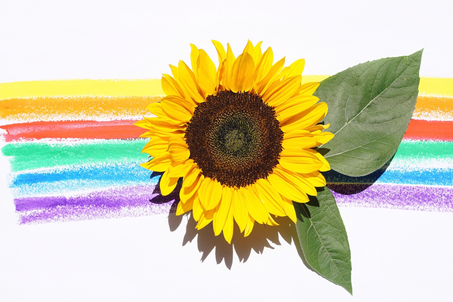 Sunflower and children's rainbow crayon
