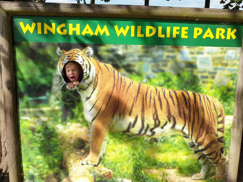Wingham Wildlife Park tiger